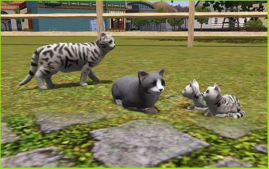 Как в симс 3 сделать кота и кошку парой